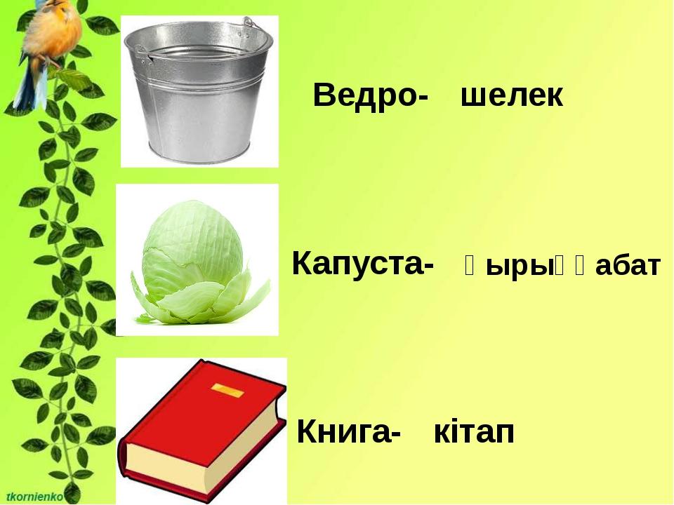 Ведро- Капуста- Книга- шелек қырыққабат кітап