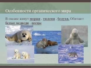 Особенности органического мира В океане живут моржи , тюлени , белухи. Обитаю