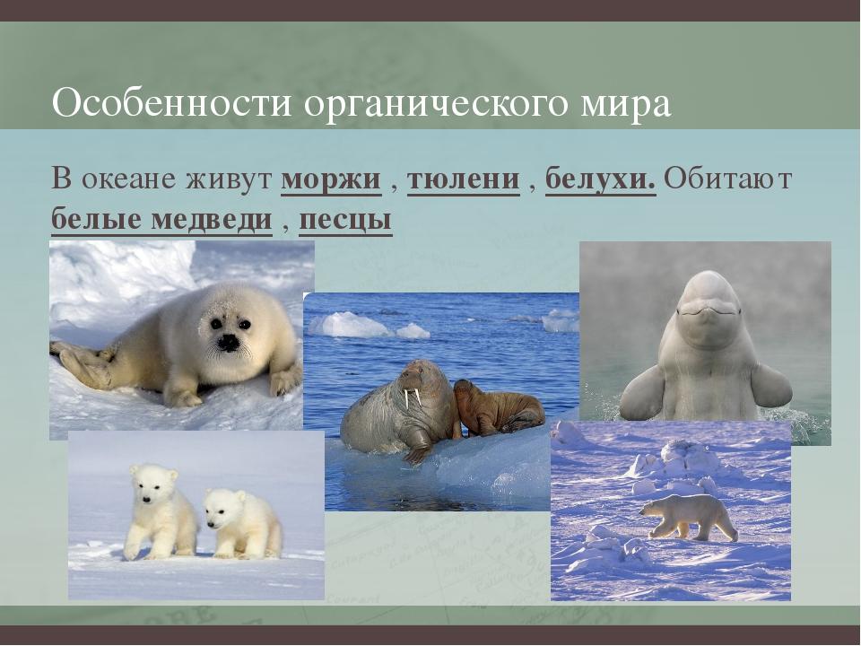 Особенности органического мира В океане живут моржи , тюлени , белухи. Обитаю...
