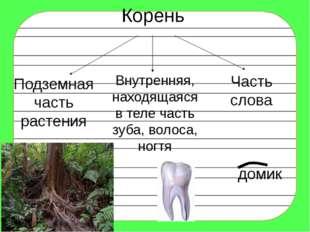 Корень Подземная часть растения Внутренняя, находящаяся в теле часть зуба, во