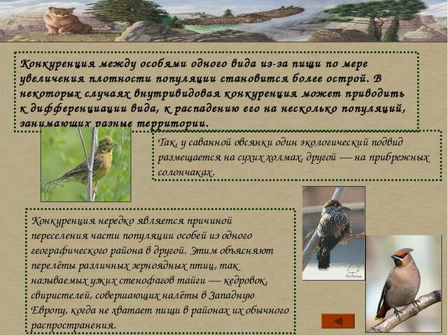 Так, у саванной овсянки один экологический подвид размещается на сухих холмах...