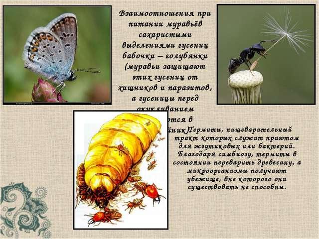 Термиты, пищеварительный тракт которых служит приютом для жгутиковых или бак...