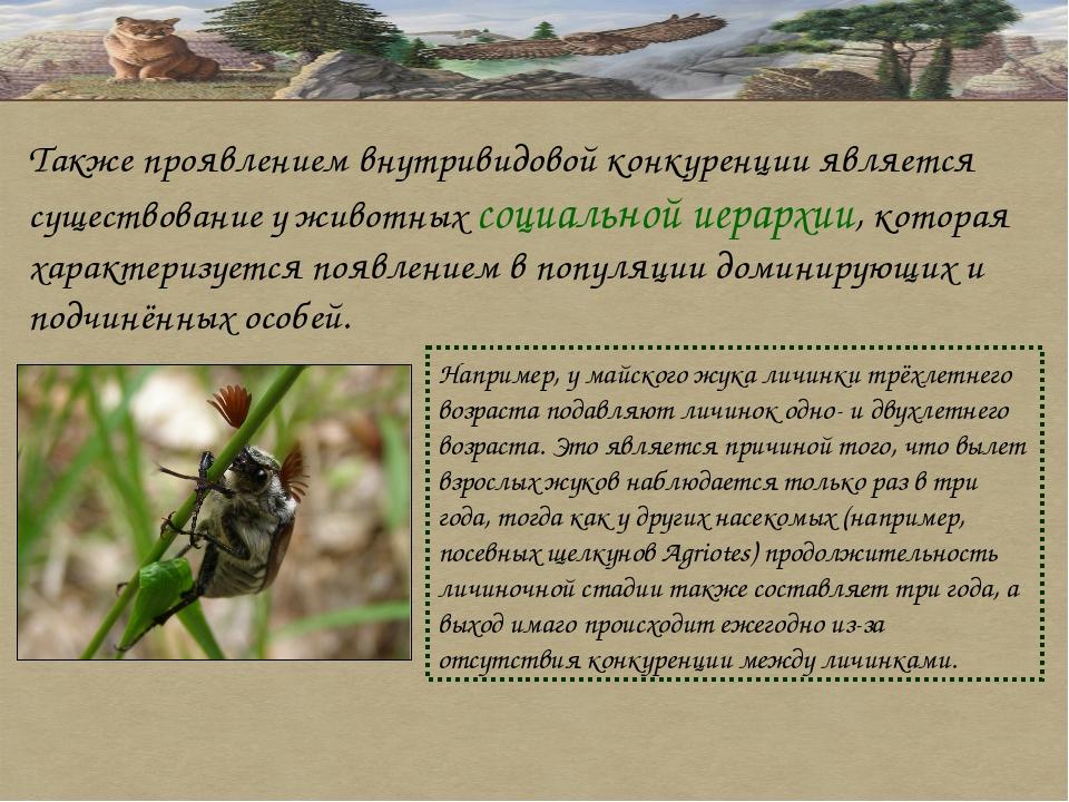 Также проявлением внутривидовой конкуренции является существование у животных...