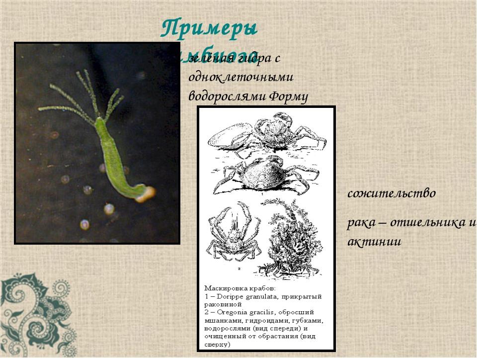 Примеры симбиоза сожительство рака – отшельника и актинии зелёная гидра с одн...