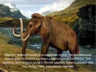 Мамонт— млекопитающие рода вымерших слонов. При максимальной высоте животног