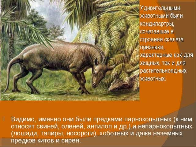 Видимо, именно они были предками парнокопытных (к ним относят свиней, оленей,...