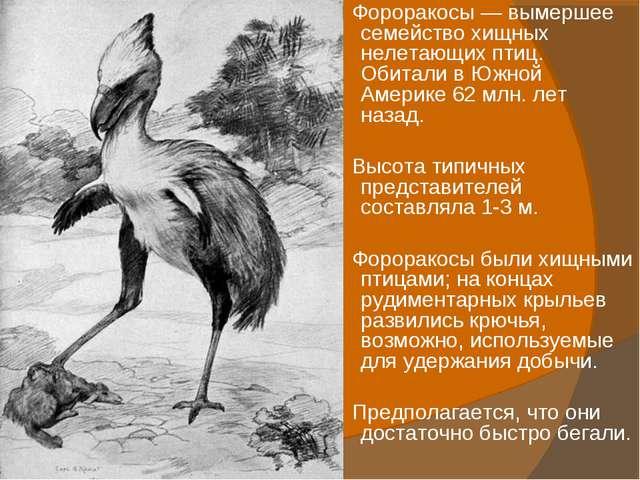 Фороракосы — вымершее семейство хищных нелетающих птиц. Обитали в Южной Амер...