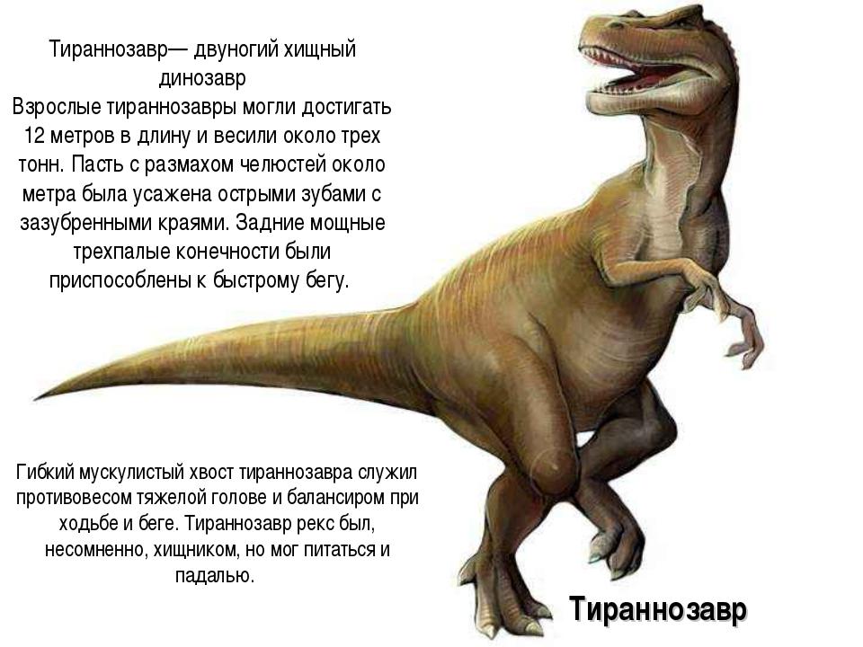 Тираннозавр— двуногий хищный динозавр Взрослые тираннозавры могли достигать 1...