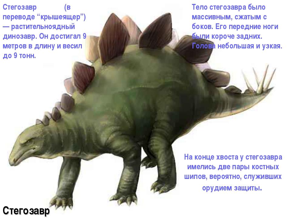 На конце хвоста у стегозавра имелись две пары костных шипов, вероятно, служи...