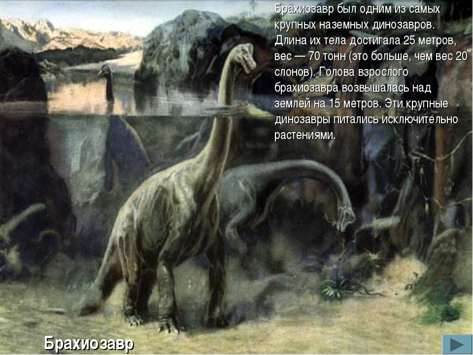 Брахиозавр был одним из самых крупных наземных динозавров. Длина их тела дост...