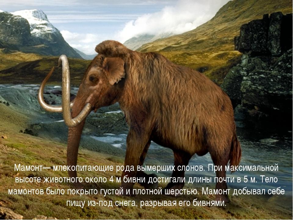 Мамонт— млекопитающие рода вымерших слонов. При максимальной высоте животног...