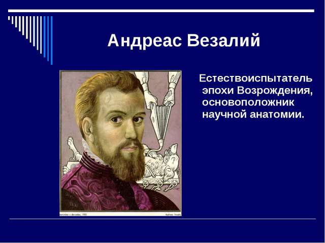 Андреас Везалий Естествоиспытатель эпохи Возрождения, основоположник научной...