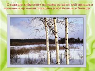 С каждым днём снегу на полях остаётся всё меньше и меньше, а проталин появля