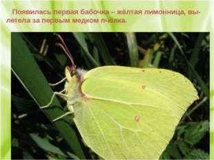 Появилась первая бабочка – жёлтая лимонница, вы- летела за первым медком пчё