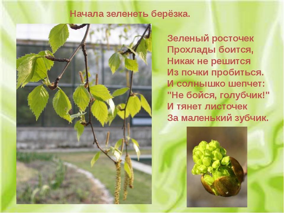 Зеленый росточек Прохлады боится, Никак не решится Из почки пробиться. И солн...