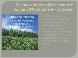 В сельском хозяйстве занято более 80% населения страны. На Великой Китайской