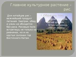 Главное культурное растение – рис. Для китайцев рис – важнейший продукт питан