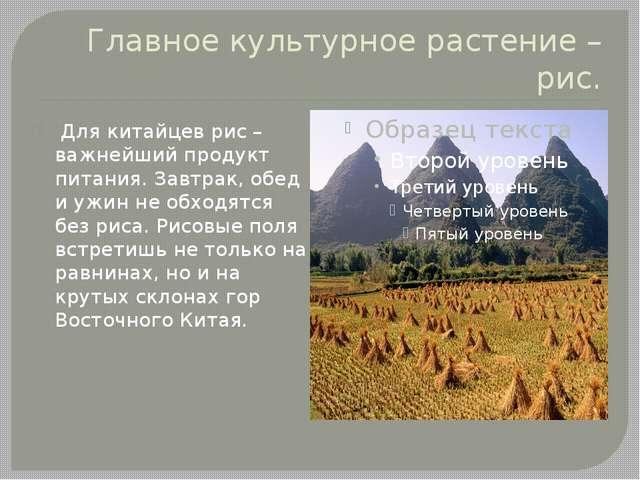 Главное культурное растение – рис. Для китайцев рис – важнейший продукт питан...
