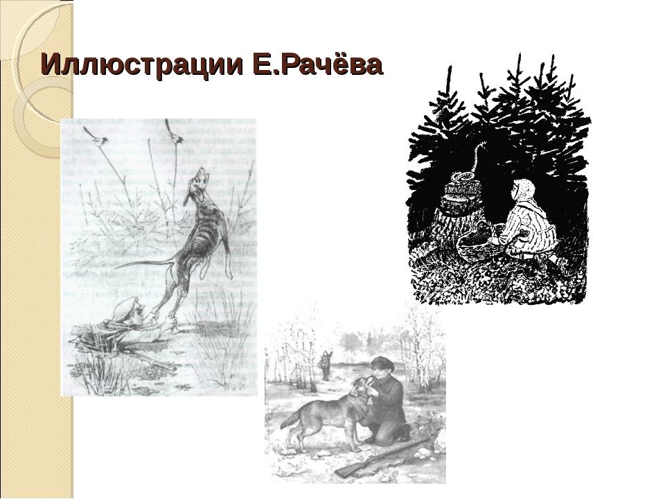 Иллюстрации Е.Рачёва