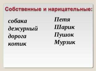 собака дежурный дорога котик Петя Шарик Пушок Мурзик