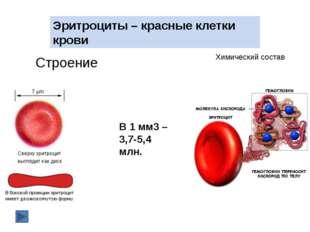 Этапы свертывания крови Рана I этап Разрушение тромбоцитов + Ca Освобождение