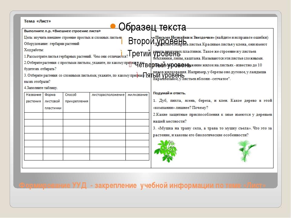 Формирование УУД - закрепление учебной информации по теме «Лист»