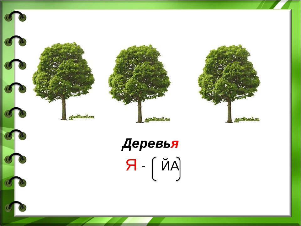 Деревья Я - ЙА