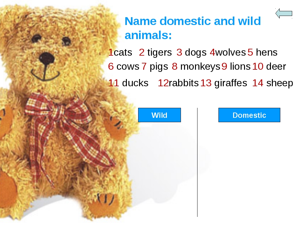 Name domestic and wild animals: 1cats 2 tigers 3 dogs 4wolves 5 hens 6 cows 7...