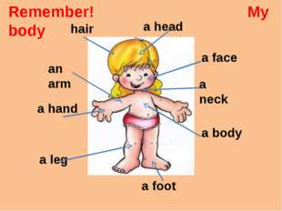 a head a face a body a neck an arm a hand hair a leg a foot Remember! My body