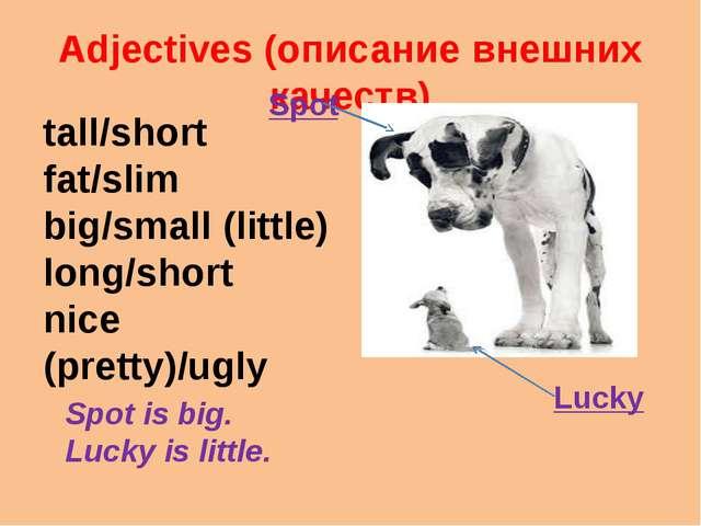 Adjectives (описание внешних качеств) tall/short fat/slim big/small (little)...