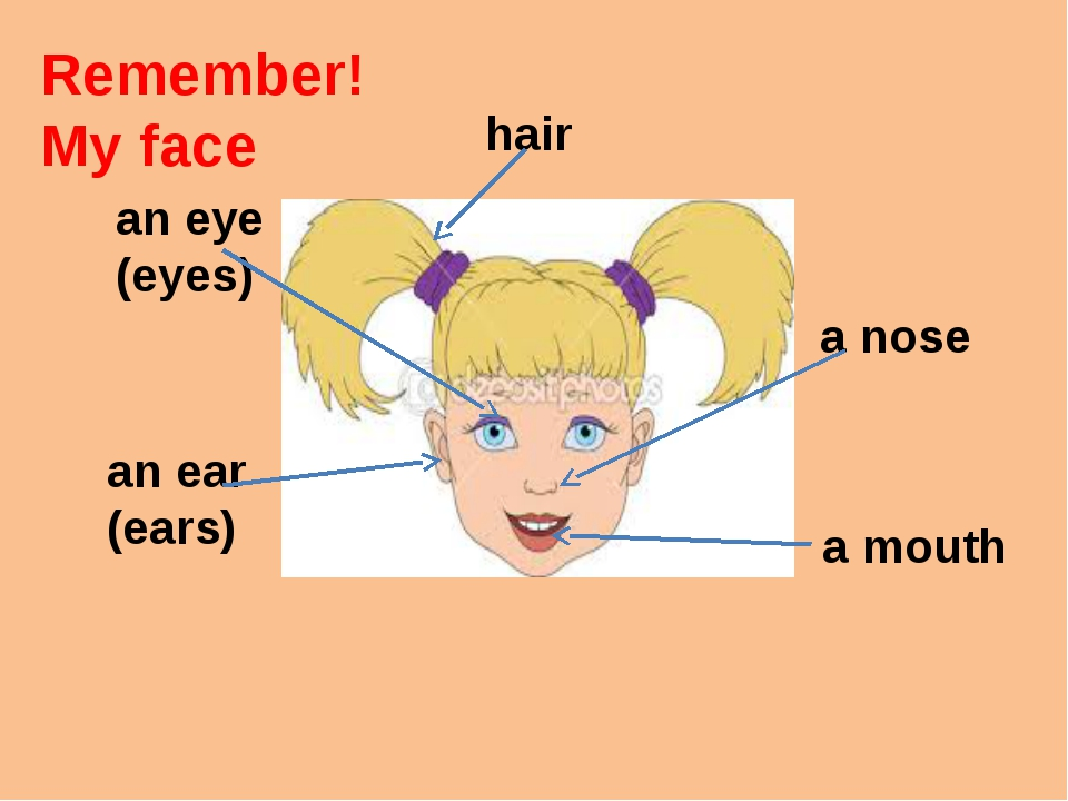Remember! My face an eye (eyes) an ear (ears) a nose a mouth hair