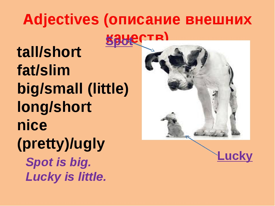 Adjectives (описание внешних качеств) tall/short fat/slim big/small (little)...