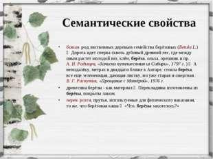 Семантические свойства ботан. род лиственных деревьев семейства берёзовых (B