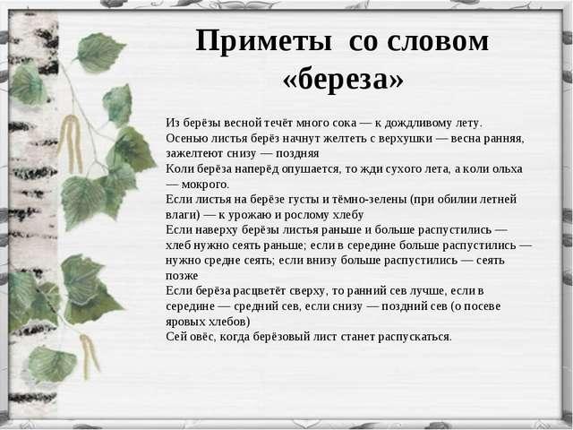 Приметы со словом «береза» Из берёзы весной течёт много сока— к дождливому...