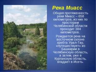 Общая протяженность реки Миасс – 658 километров, из них по просторам Челябинс