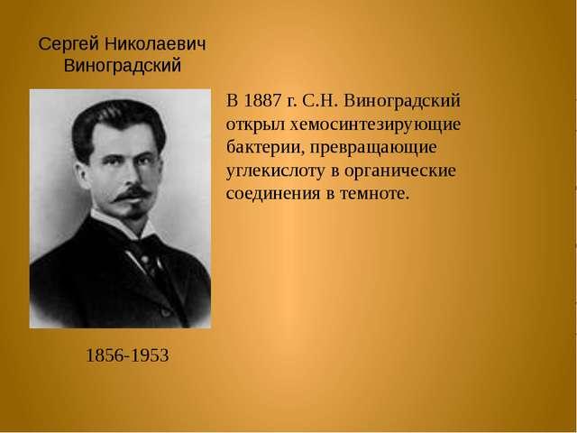 Сергей Николаевич Виноградский 1856-1953 В 1887 г. С.Н. Виноградский открыл х...