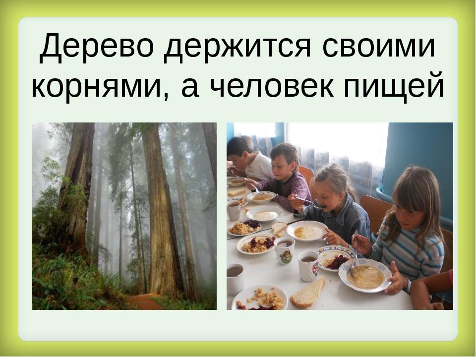 Дерево держится своими корнями, а человек пищей