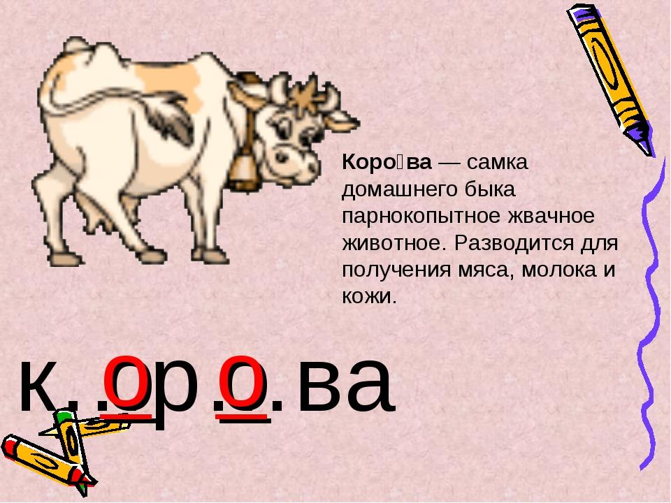 Коро́ва — самка домашнего быка парнокопытное жвачное животное. Разводится для...