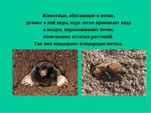 Животные, обитающие в почве, делают в ней ходы, куда легко проникает вода и