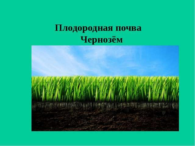 Плодородная почва Чернозём