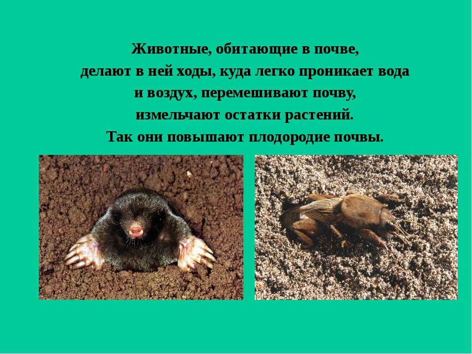 Животные, обитающие в почве, делают в ней ходы, куда легко проникает вода и...