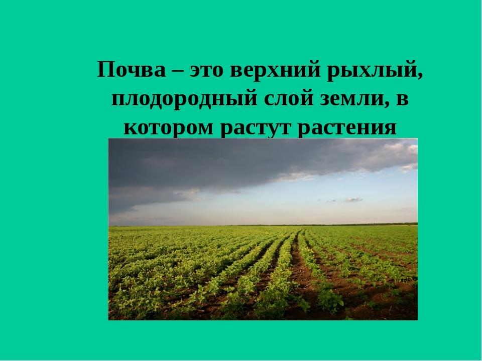Почва – это верхний рыхлый, плодородный слой земли, в котором растут растения