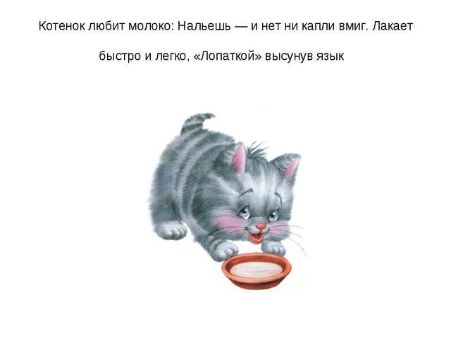 Котенок любит молоко: Нальешь — и нет ни капли вмиг. Лакает быстро и легко, «...