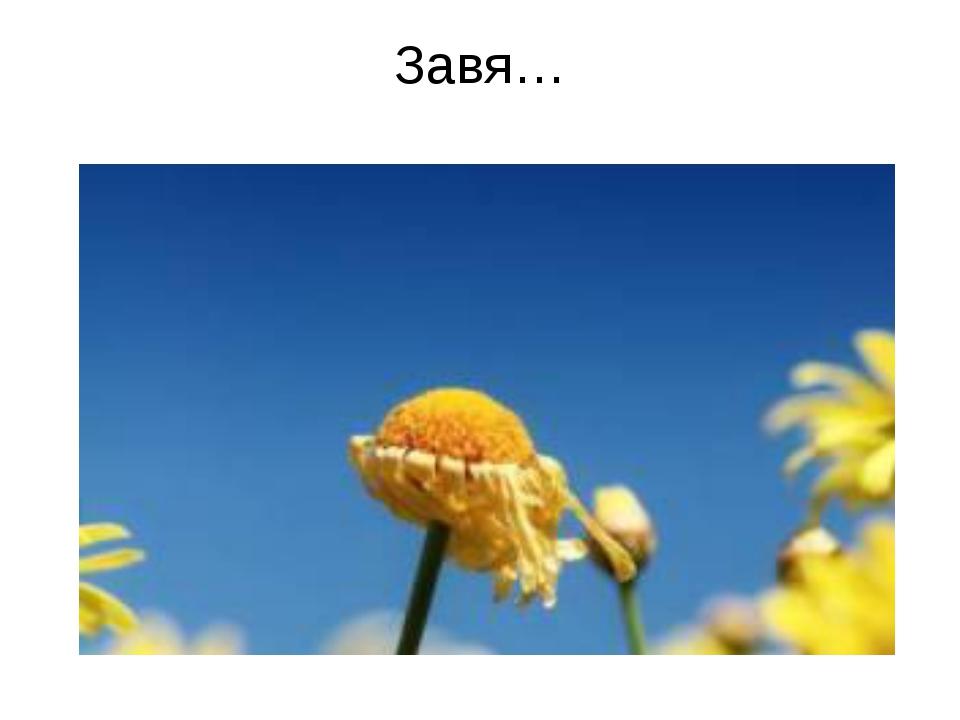 Завя…