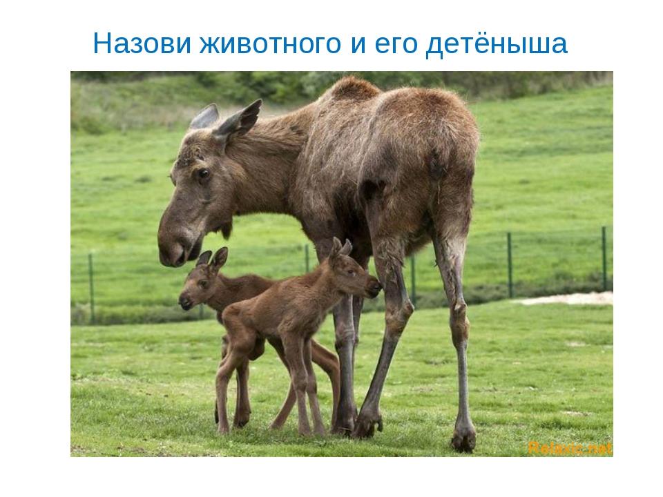 Назови животного и его детёныша