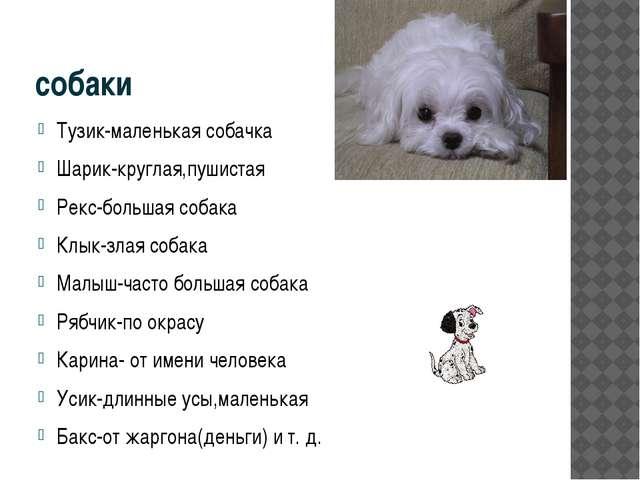 собаки Тузик-маленькая собачка Шарик-круглая,пушистая Рекс-большая собака Клы...