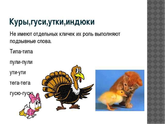 Куры,гуси,утки,индюки Не имеют отдельных кличек их роль выполняют подзывные с...