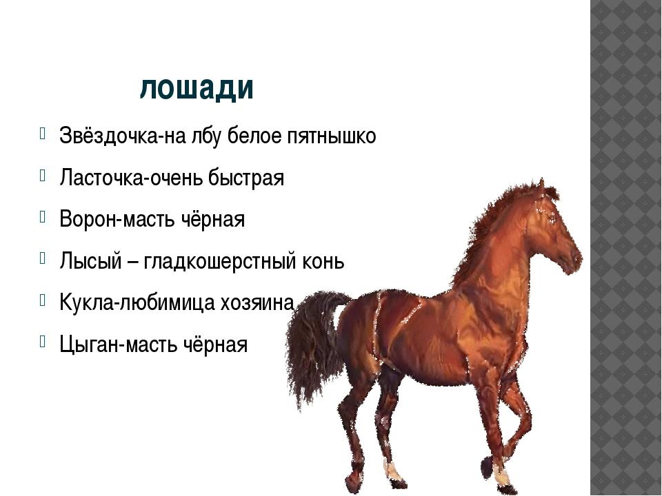 лошади Звёздочка-на лбу белое пятнышко Ласточка-очень быстрая Ворон-масть чё...