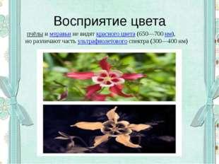 Восприятие цвета пчёлыимуравьине видяткрасного цвета(650—700нм), но ра