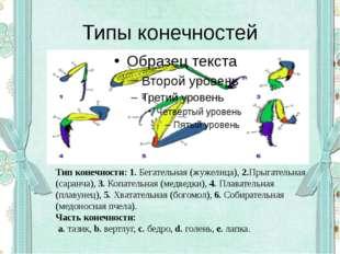Типы конечностей Тип конечности:1.Бегательная (жужелица),2.Прыгательная (с